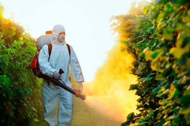 Resultado de imagen para agroquimicos enferman