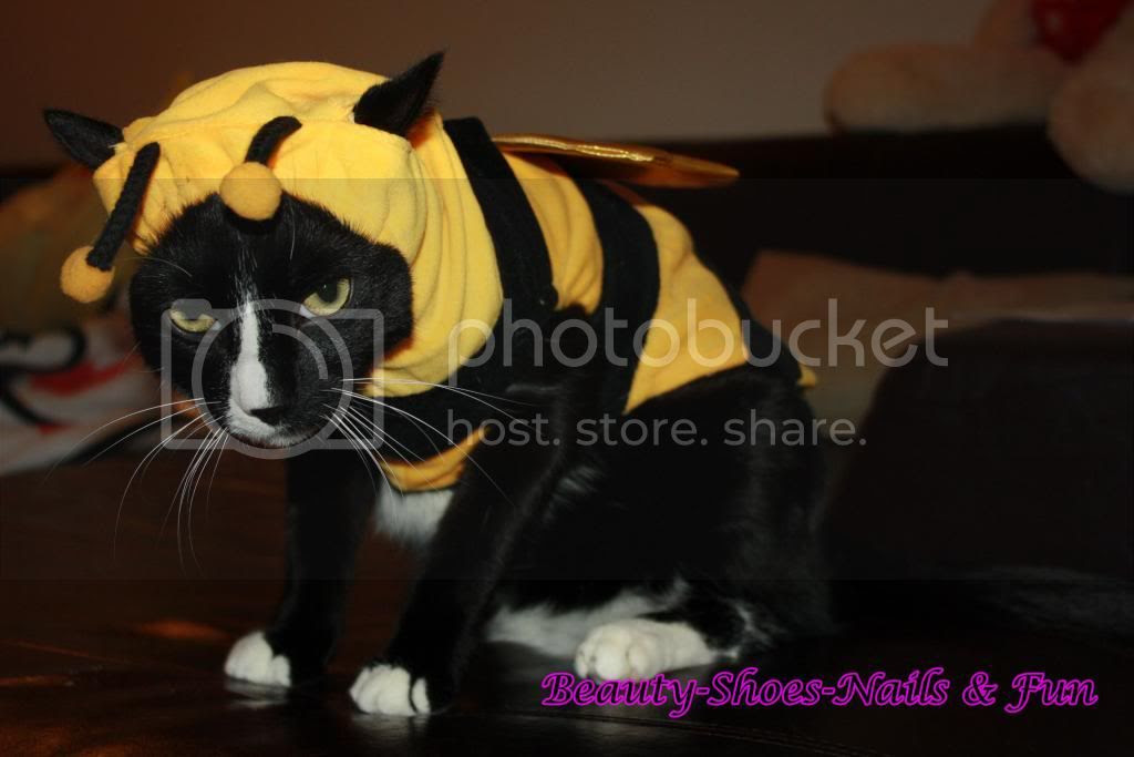 photo BumbleBee4_zps93ed23f7.jpg