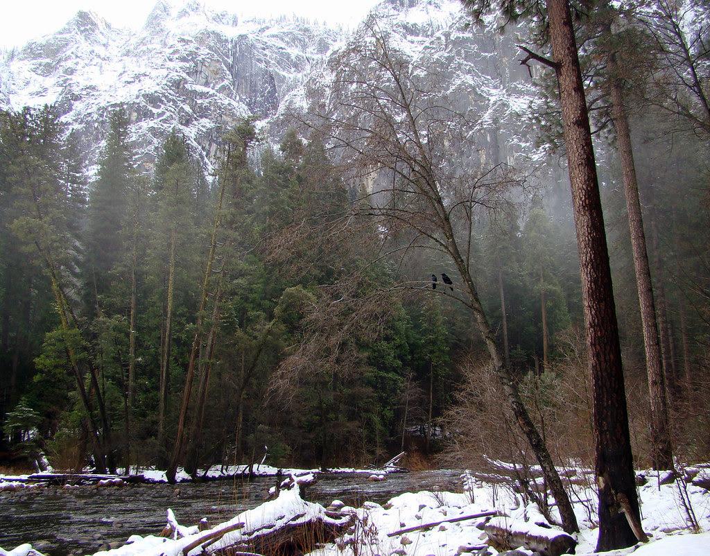 DSC04133 Yosemite pair of crows