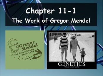 33 Biology 111 The Work Of Gregor Mendel Worksheet Answers ...