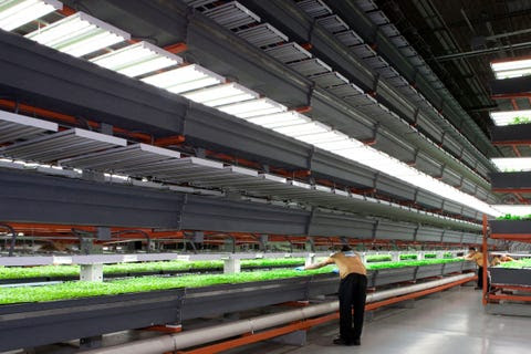 An indoor farm in an Illinois warehouse.