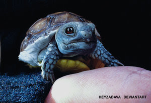 real_life_pokemon___squirtle_by_heyzabava.jpg