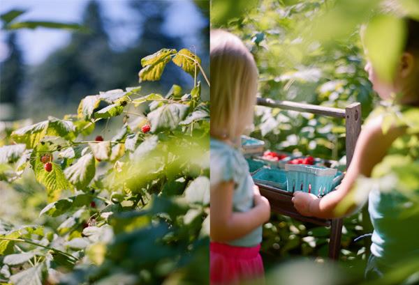 2012_0725_Raspberries02.jpg