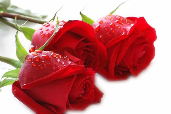 Fondos De Flores Imágenes Flores Página 232
