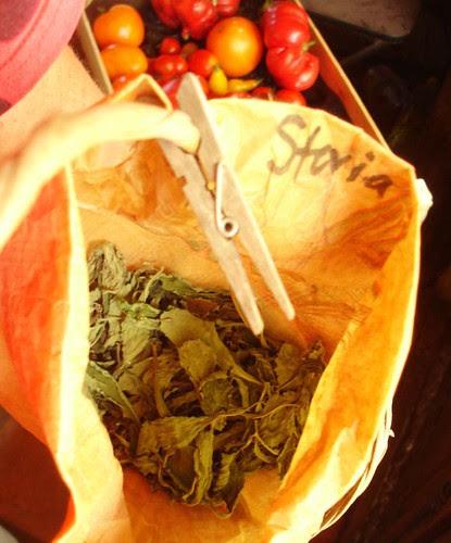 Drying Stevia