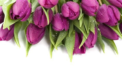 Purple Tulips 12713 1920x1080 px ~ HDWallSource.com
