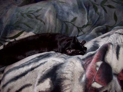 Mmmmm...Fuzzy Blankety Goodnes