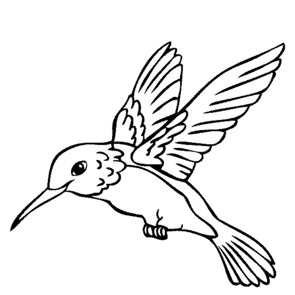 Hummingbird Coloring Pages Printable at GetColorings.com ...