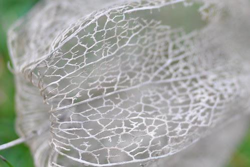Fruit husk closeup