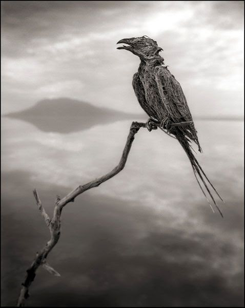 A petrified avian that was found at Lake Natron in Tanzania.