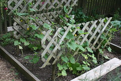 summer garden 110