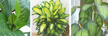 Inside Plants That Dont Need Sun