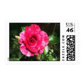 rose postage stamp