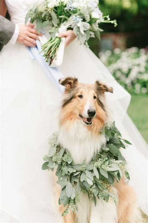17 Best ideas about Collie on Pinterest   Collie puppies