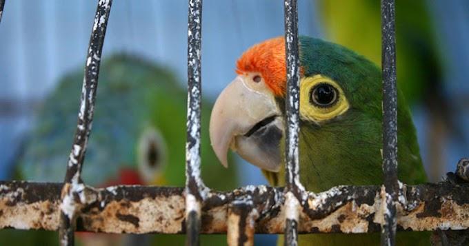 India Prohíbe Enjaular Aves ¡Por Fin Volarán Libres Como Debe Ser!
