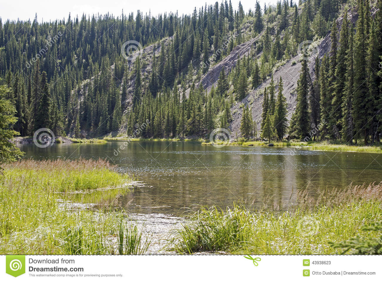 Lake In The Alaskan Wilderness Stock Photo  Image: 43938623