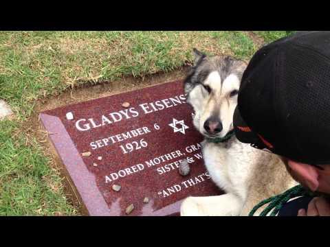 Il cane lupo che piange sulla tomba della nonna