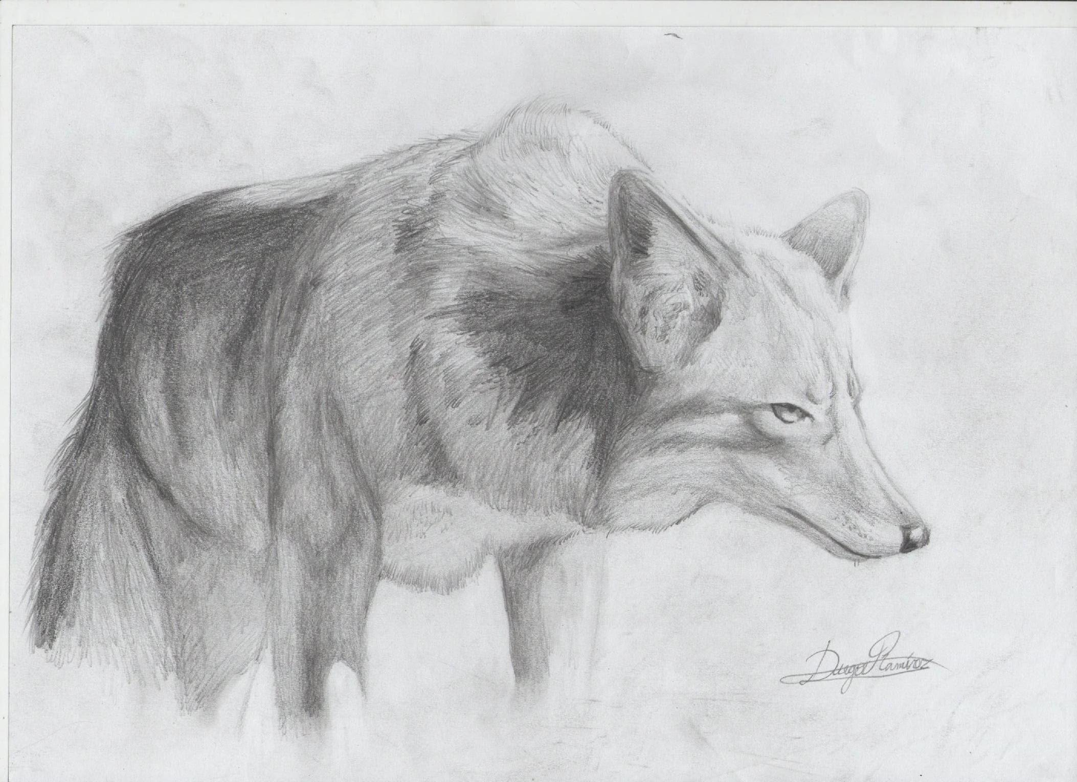 Dibujos De Animales Lapiz Imagui