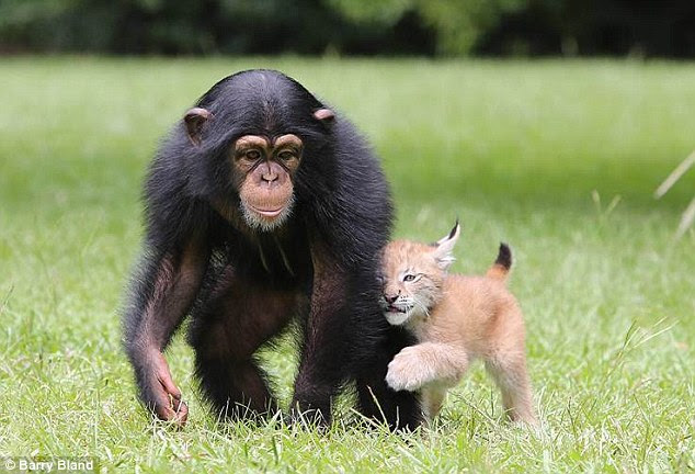 Cuddles: The pair cosy up together at Myrtle Beach Safari, in South Carolina