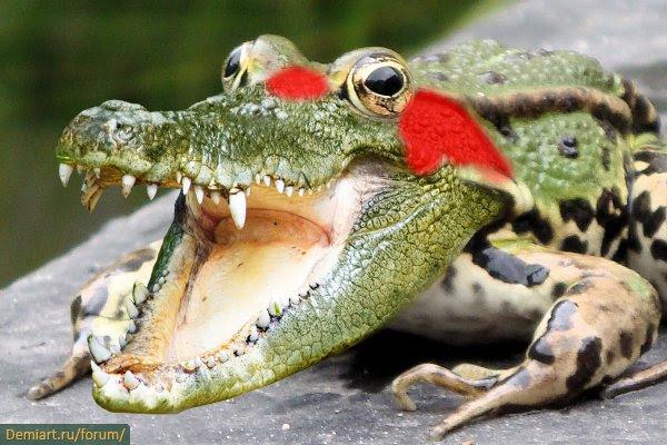 Комбинируем Крокодила и Лягушку в Фотошопе