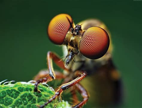 Wallpaper Fly, eye, macro, Animals #4496