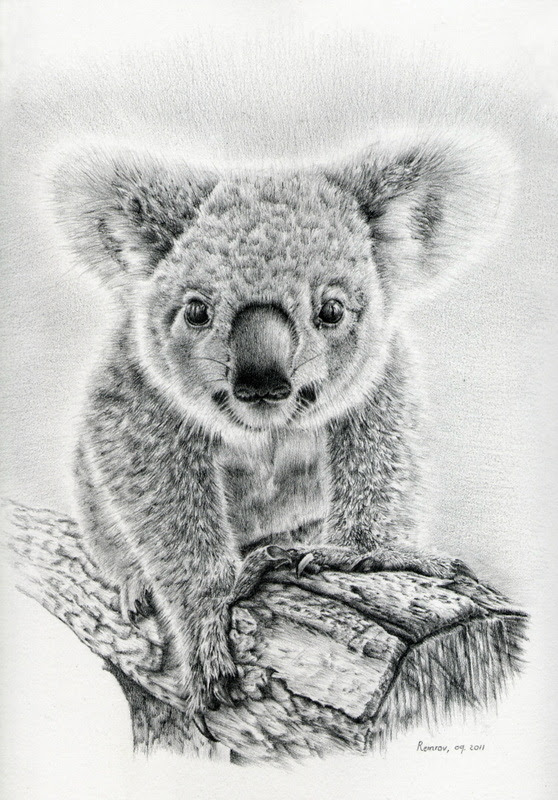 Photorealistic Pencil Drawings of Animals - Remrov's Artwork