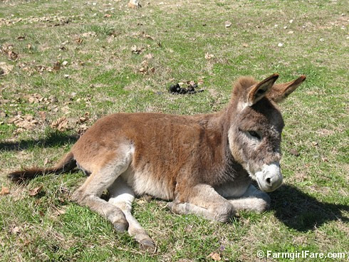 The Daily Donkey 95