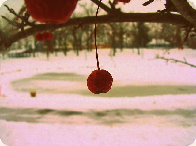 Berry Snow