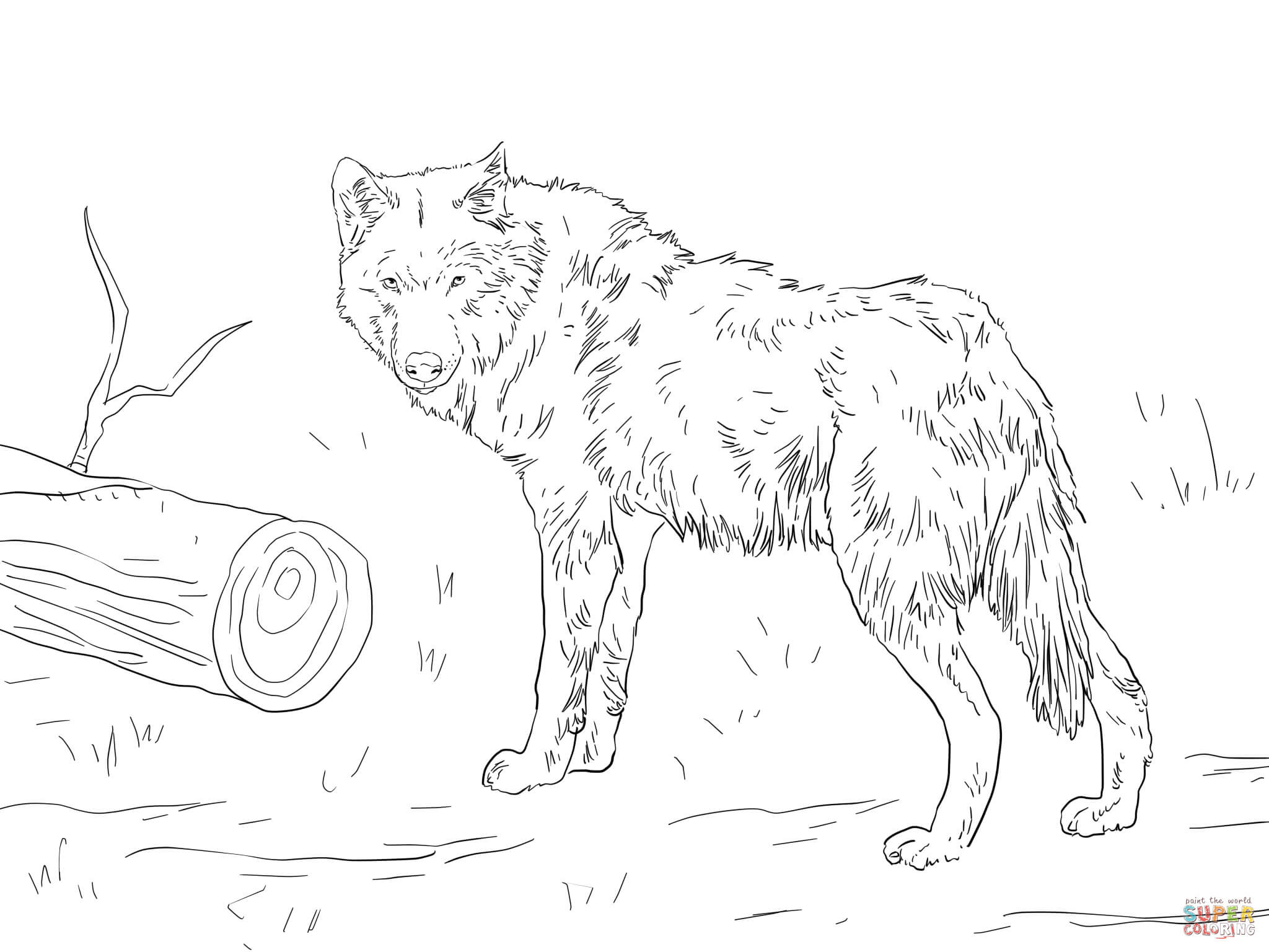 Euroasian Wolf coloring page | Free Printable Coloring Pages