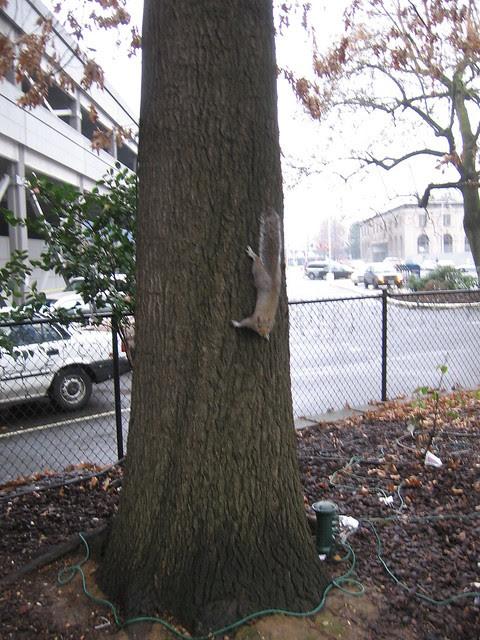 postal_squirrel