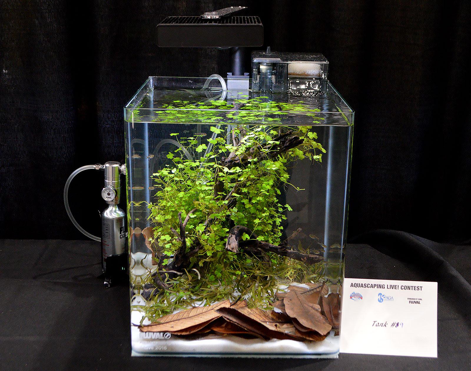 Aquascape Ideas Aquascaping Nano Tank