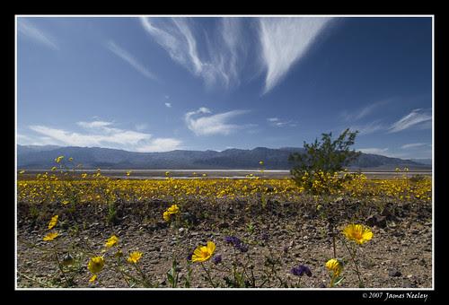 Desolation in Bloom