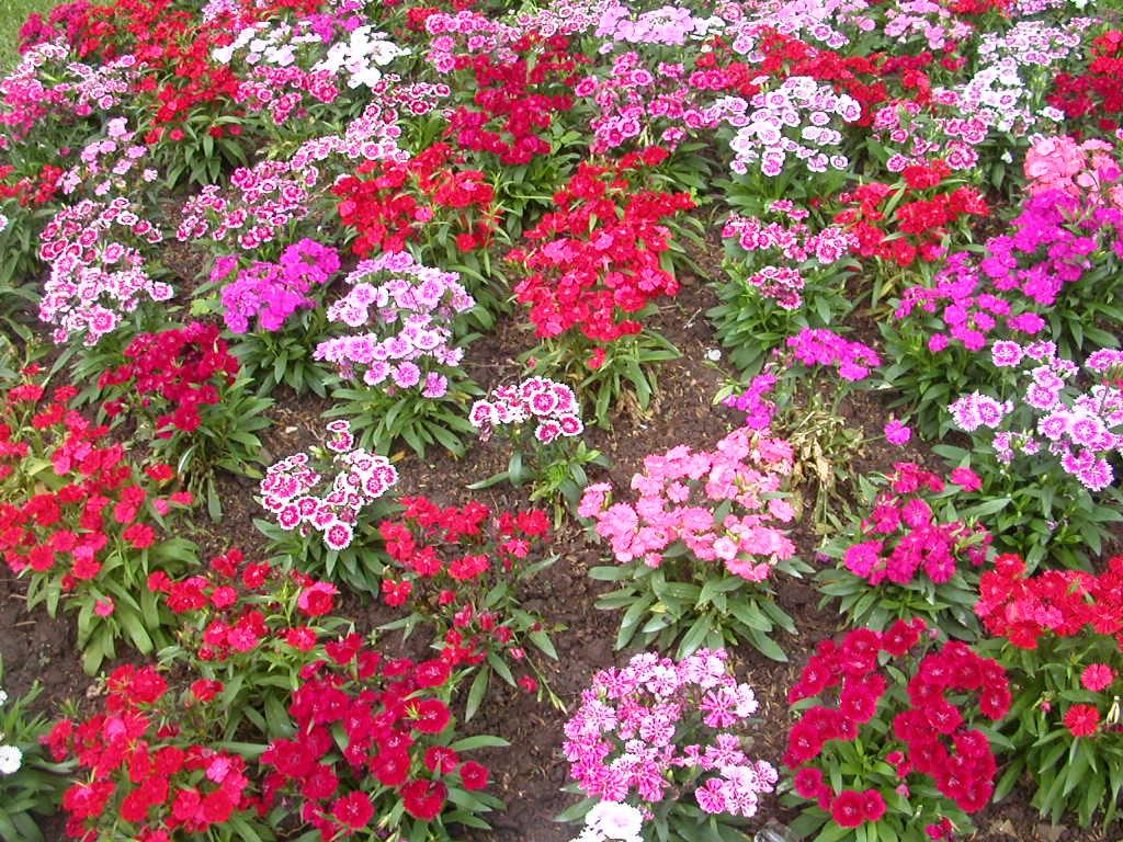 Plant Flower Gardens