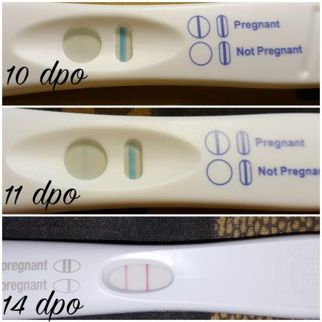 Negative Pregnancy Test 10 Dpo - Pregnancy Symptoms