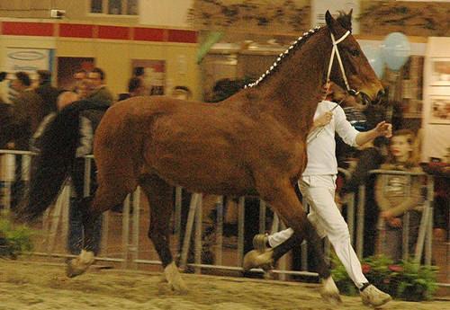 horses lovers  horse breeds begi tinker horse  vanner horse country of origin  ireland intro