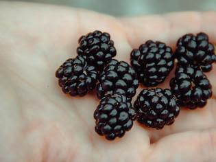 Φωτογραφία για Το αντιφλεγμονώδες φρούτο – φάρμακο που προφυλάσσει το δέρμα