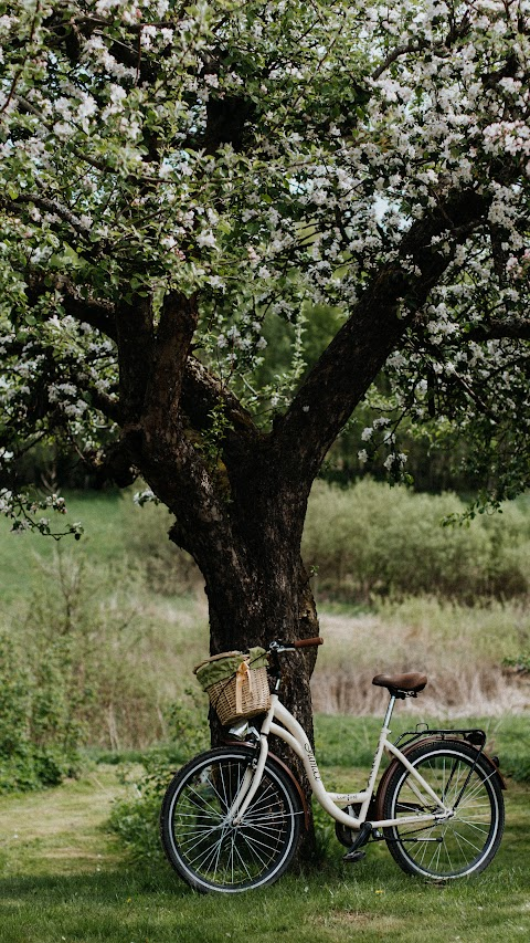 خلفية جميلة لشجرة من الطبيعة مع دراجة هوائية بدقة عالية