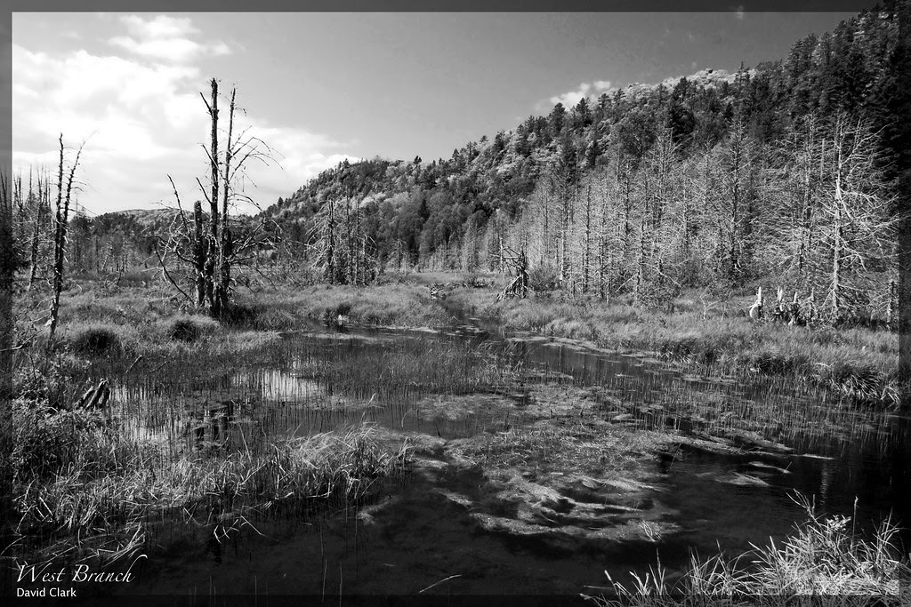 A swamp scene, with cliffs in the background, all in high-contrast black and white.
