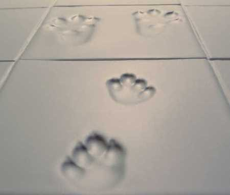 tile floor treatment tips | Crazy Body Painting: Tile care: Maintenance and cleaning ...