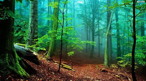 forest hd wallpapers wallpaper cave