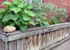 July 11 Garden (1)