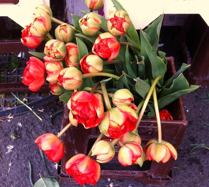 Red Rose Cafe Lakewood Menu