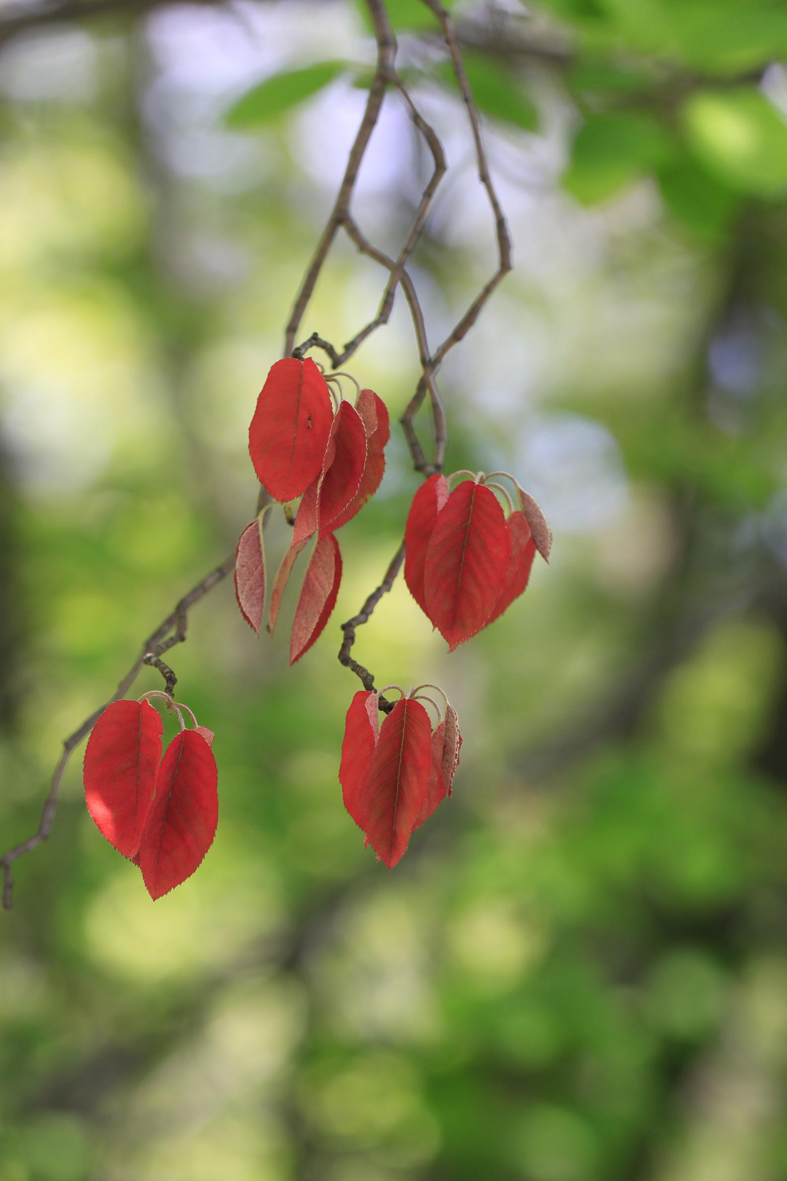 on branch serviceberry