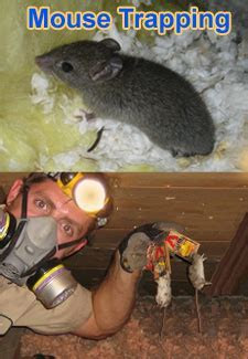 The Best Way to Kill Mice   Poison or Snap Traps?