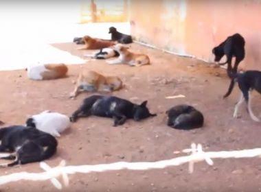 Livramento: Promotoria 'enquadra' prefeitura contra maus-tratos a animais