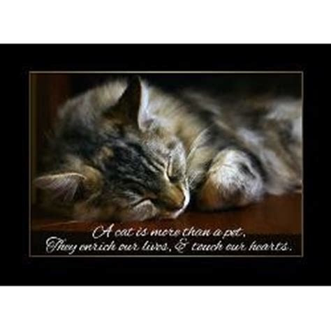 Comforting Quotes Death Pet