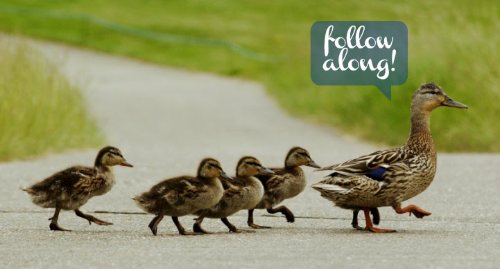 ducklings follow