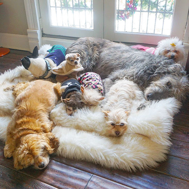 man-adopts-senior-dogs-shelter-steve-greig-110