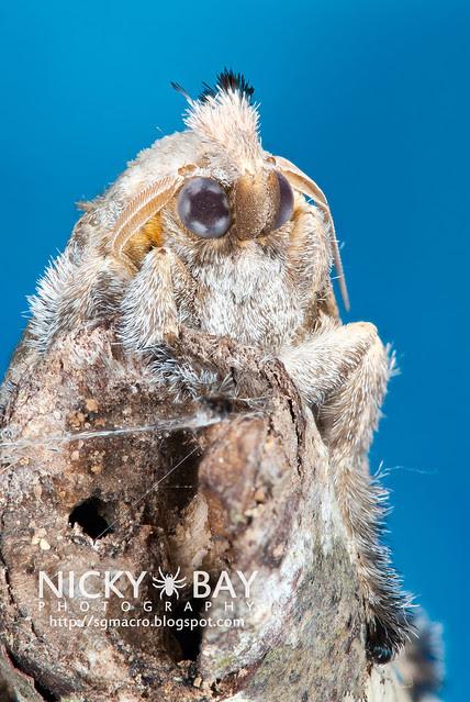 Moth - DSC_6554