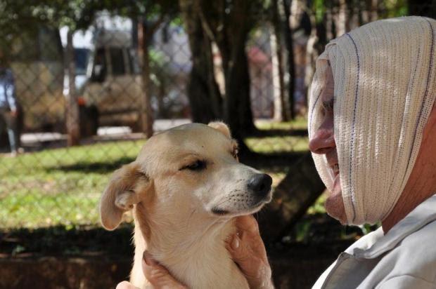 Cão ganhou cama, travesseiro e comida em hospital